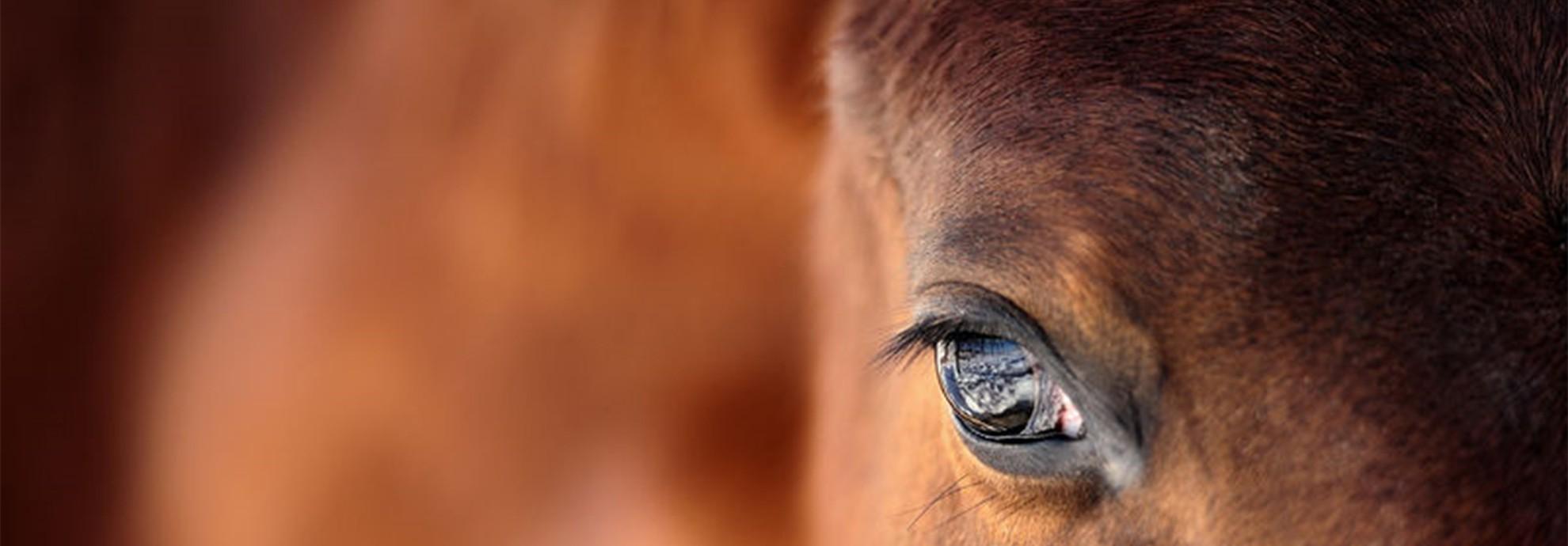 El mundo del caballo